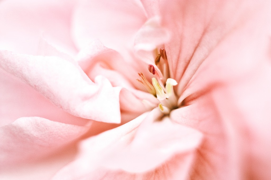 blomma_1_2_webben