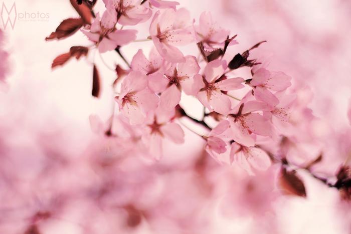 rosa_blommor_maj2013_2_webben