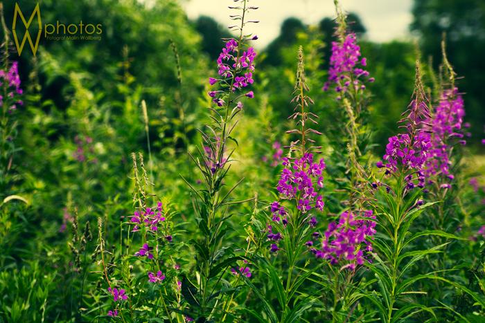 blommor_vastervik_1_webben