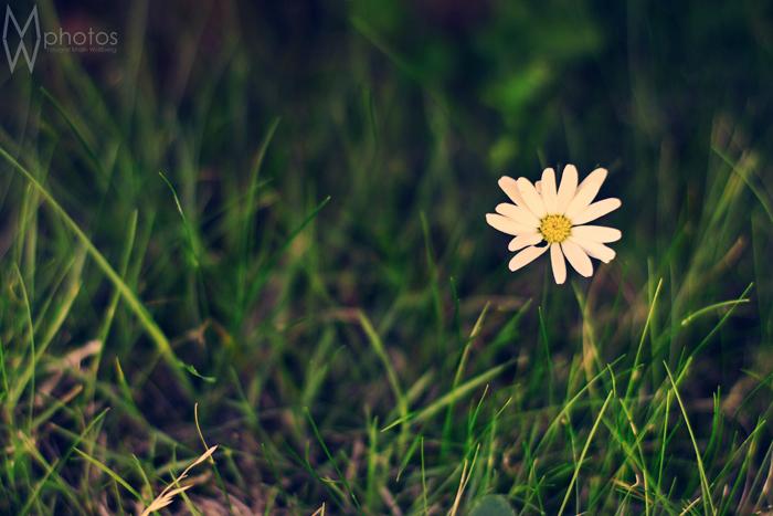 blomma_juli_2013_1_webben