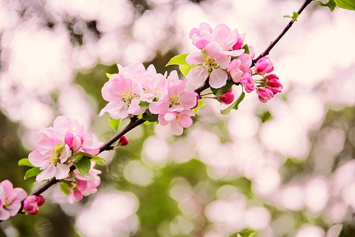 pink_flowers_maj_2016_1_webben