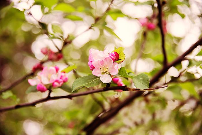pink_flowers_maj_2016_3_webben