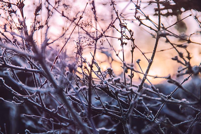 vinter_frost_grenar_2016_1_webben